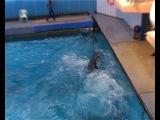 Московский дельфинарий 7